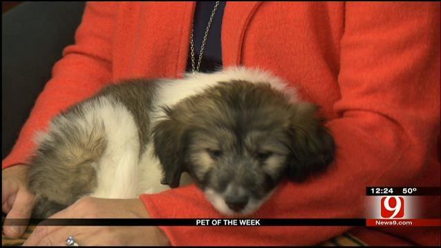 Pet Of The Week: Meet Noel