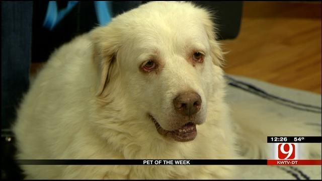 Pet Of The Week: Meet Mattie