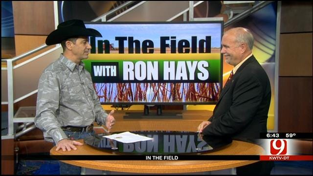 In The Field: Tom Persechino, American Quarter Horse Association