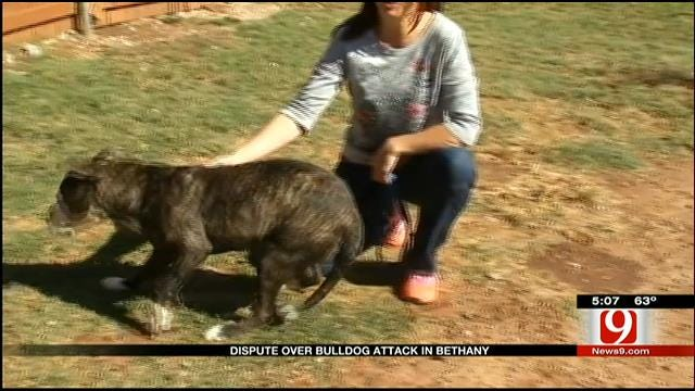 Dispute Over Bulldog Attack In Bethany