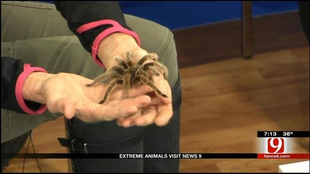 Extreme Animals Visit News 9