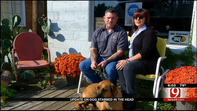 Lucy The Dog Recovering One Year After Being Stabbed In Face