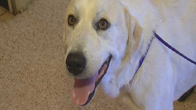 Rescue Group Works To Save Another Dog Suffering From A Gunshot Wound