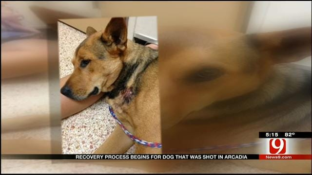 Dog Recovering From Gunshot Wound Gets Overwhelming Support