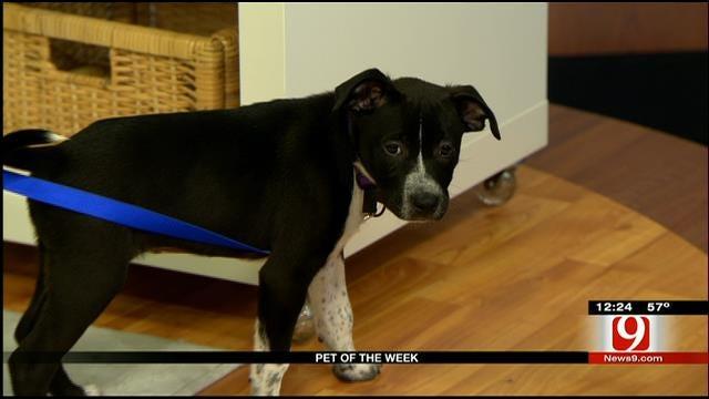 Pet Of The Week: Meet Babs