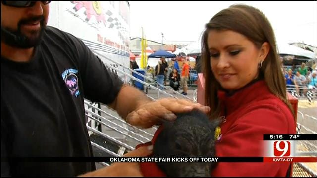 News 9's Lacey Swope Checks 'Swifty Swine' Pig Races At OK State Fair