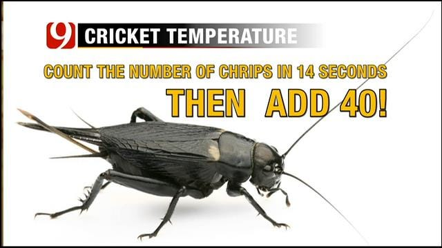 Jed Castles Explains How To Estimate The Temperature From Cricket Chirps