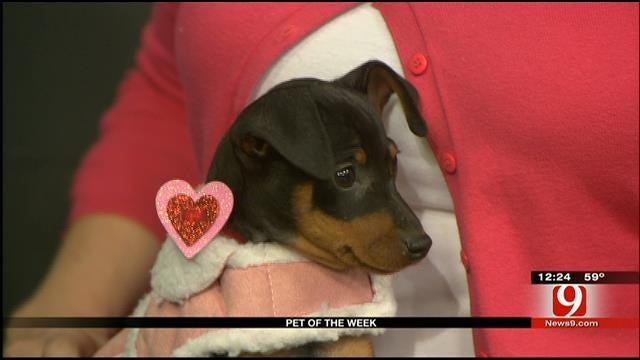 Pet Of The Week: Meet Jewel