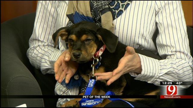 Pet Of The Week: Meet Runt