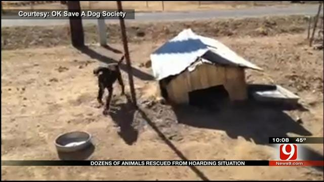 Animals Rescued From Hoarding Situation In Eastern Oklahoma