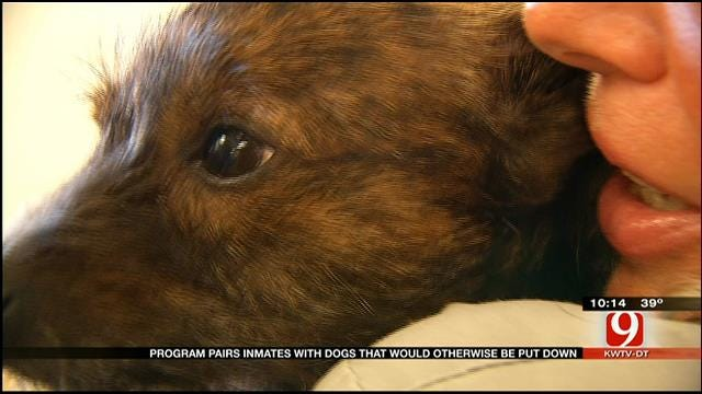 Program Pairs Inmates With Dogs At OK Correctional Facility