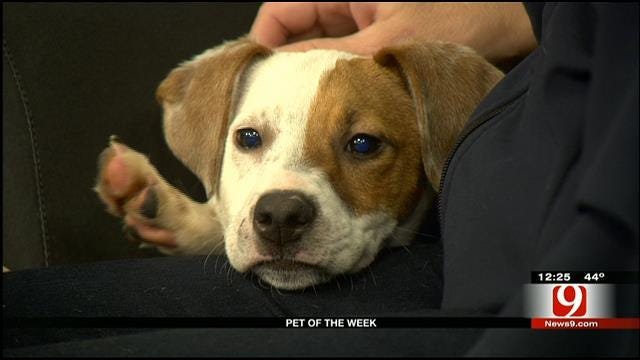 Pet Of The Week: Meet Lucy