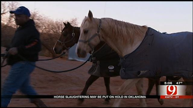 Horse Slaughter May Be Put On Hold In Oklahoma