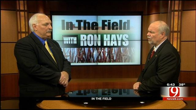 In The Field: 2014 Oklahoma Wheat Crop Condition