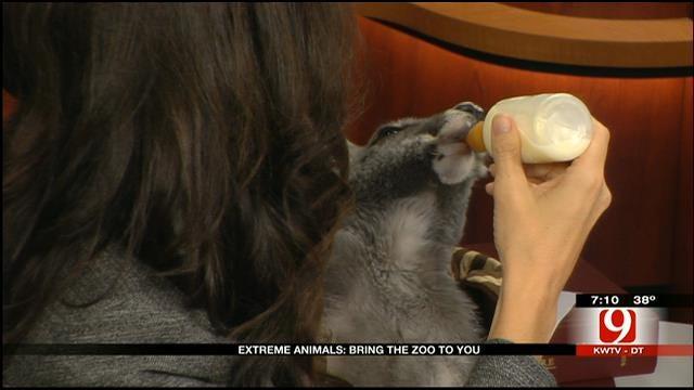 Kangaroo, Otter From 'Extreme Animals' Visit News 9