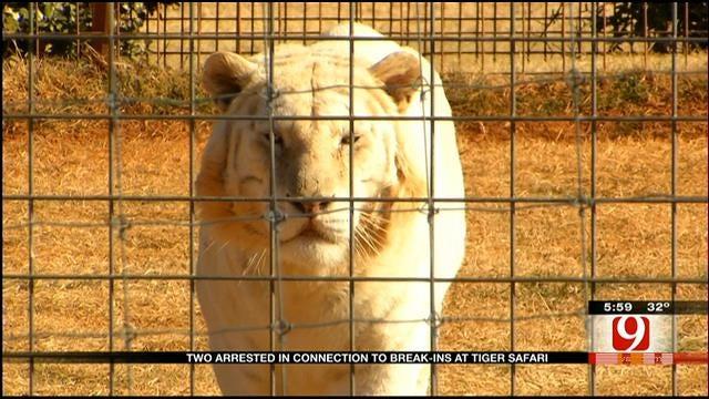 Arrests Made After Break-In At Tuttle Tiger Safari Park