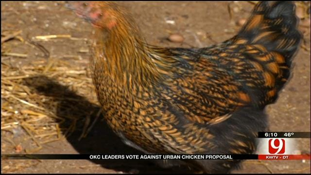 OKC Blocks Proposal Allowing Most Citizens To Have Chickens