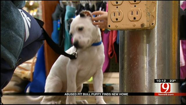 Abused OKC Pit Bull Puppy Finds A New Home