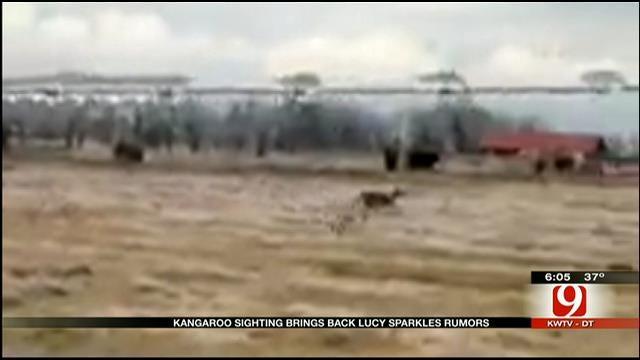 Oklahoma Hunter Catches Kangaroo On Camera