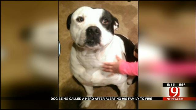 Edmond Dog Hailed A Hero For Saving Family From Fire