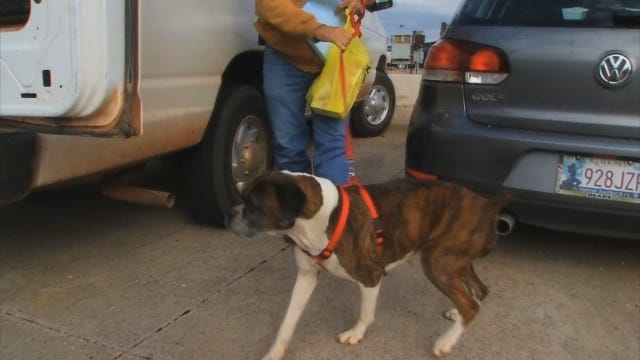 Lost North Dakota Dog Found In OK On Flight Home