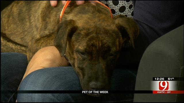 Pet Of The Week: Meet Sierra