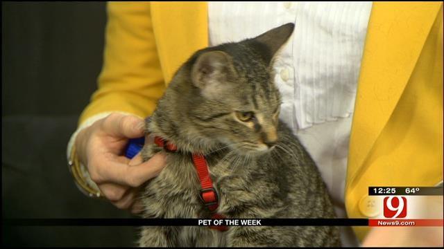 Pet Of The Week: Meet Rocky