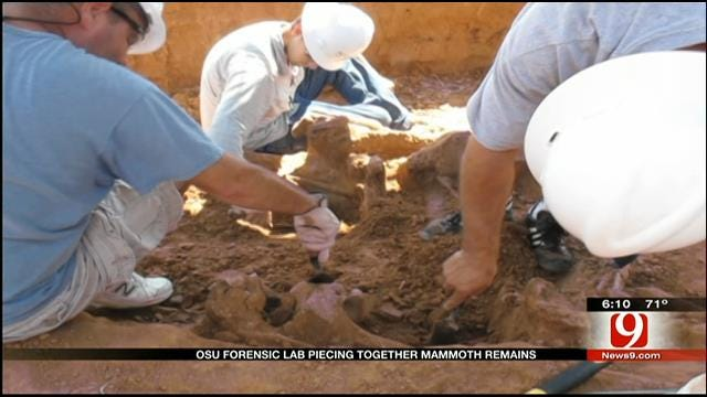 OSU Students Investigate Remains Of Unearthed Mammoth