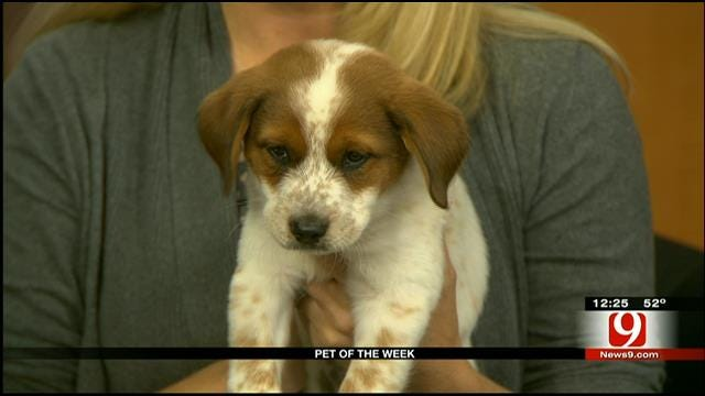 Pet Of The Week: Hansel