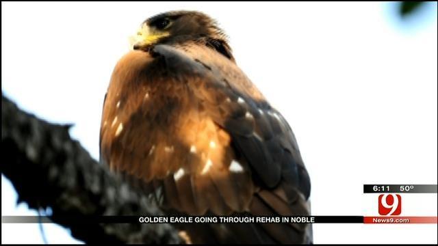 Norman Couple Rescues Golden Eagle