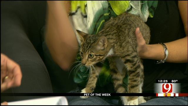 Pet Of The Week: Meet Basil