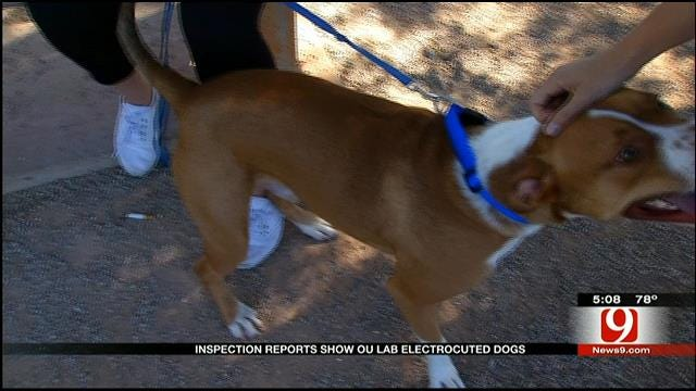 OU Lab Under Fire For Electrocuting Dogs For Medical Research