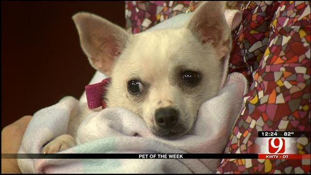 Pet Of The Week: Meet Lily