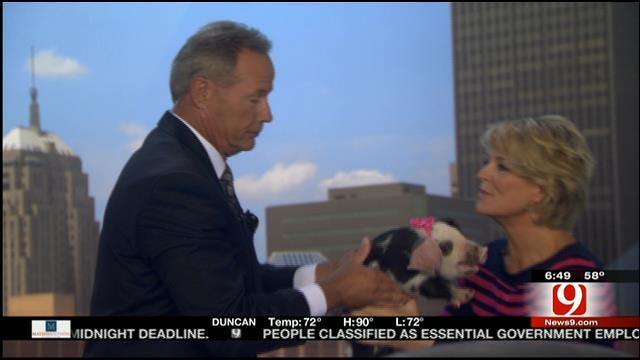 News 9 Anchor Stan Miller Kisses Pig On Live TV