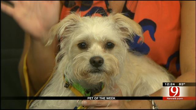 Pet Of The Week: Meet Emma