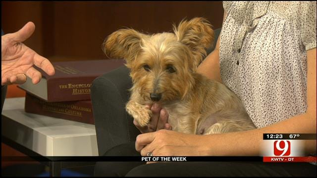 Pet Of The Week: Meet Poppy