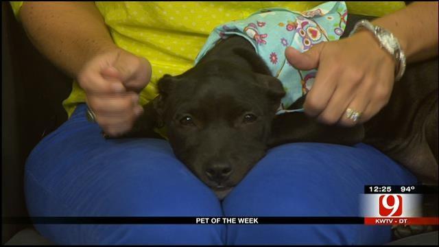Pet Of The Week: Meet Jinx