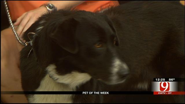 Pet Of The Week: Meet Tex