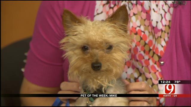 Pet Of The Week: Meet Mike