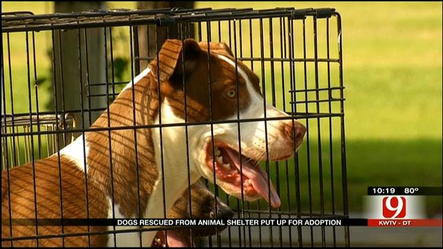 Holdenville Hosts Pet Adoption Event In Wake Of Cruelty Case