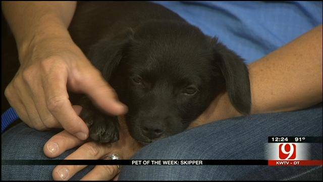 Pet Of The Week: Meet Skipper