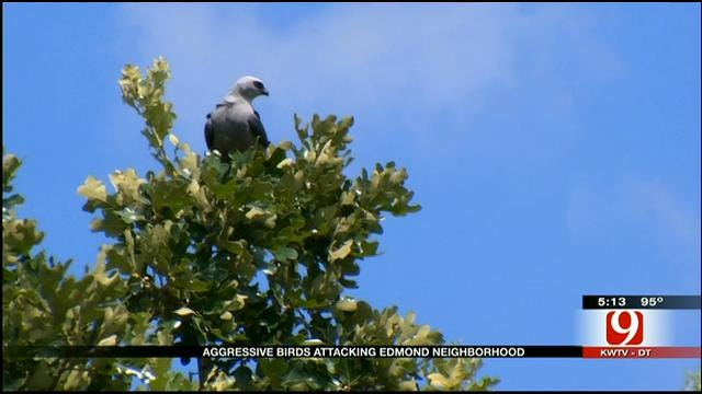 Feathered Fiends Attack Residents In Edmond Neighborhood
