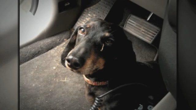 Tornado Victim Reunited With Her Dog