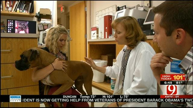 Skin Cancer Risk For Pets