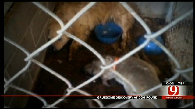 Holdenville Animal Welfare Officer Charged With Animal Cruelty