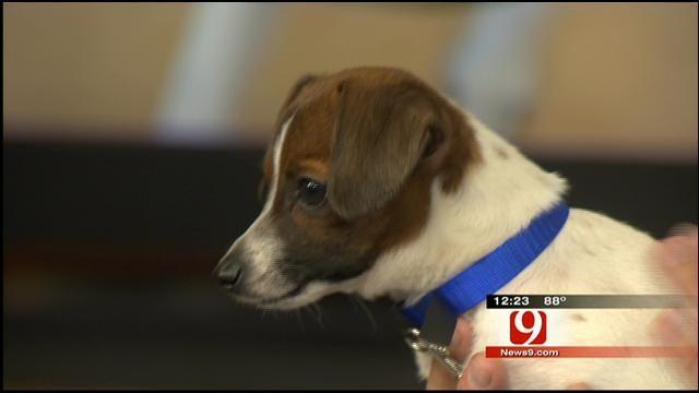 Pet Of The Week: Meet Skippy