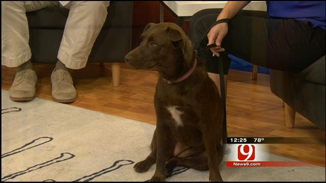 Pet Of The Week: Meet Ginger