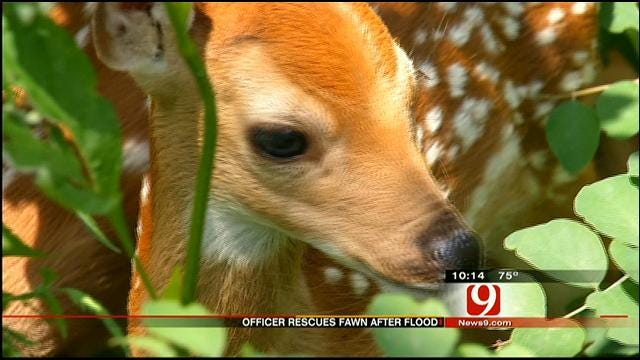 Noble Facility Taking Care Of Hundreds Of Wildlife After Storms
