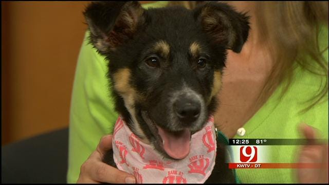 Pet Of The Week: Meet Lilly