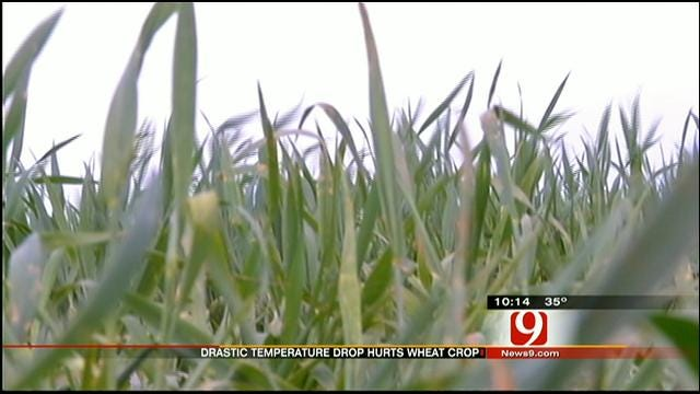 Cold Snap Could Devastate Oklahoma's #1 Crop